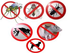 Уничтожение-насекомых