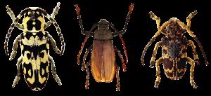 уничтожение насекомых киев