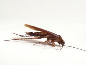 вывести тараканов киев