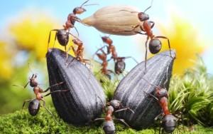 как уничтожить муравьев