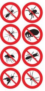насекомые в квартире