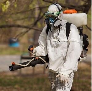 служба-уничтожения-насекомых-и-грызунов