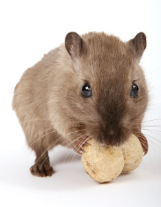 уничтожение мышей киев