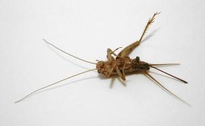борьба с тараканами киев