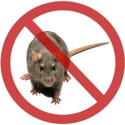 вывести крыс